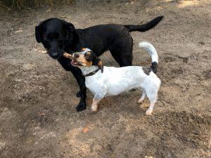 Go Dogs, Angebote für Mensch und Hund
