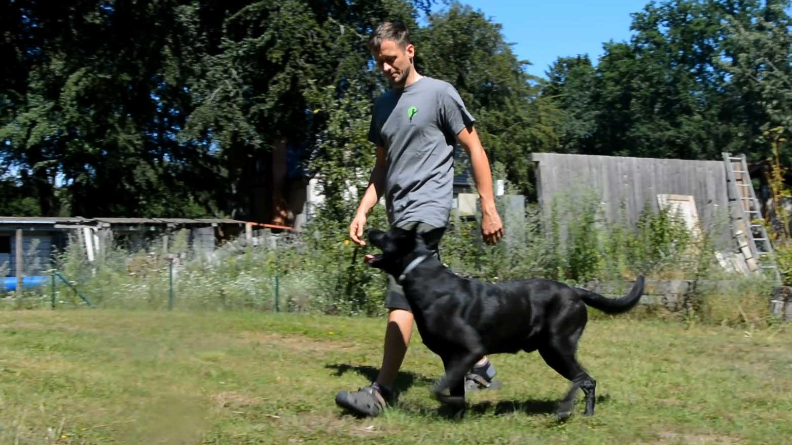 Video Hundegehorsam Robert Drobeck und Tüte