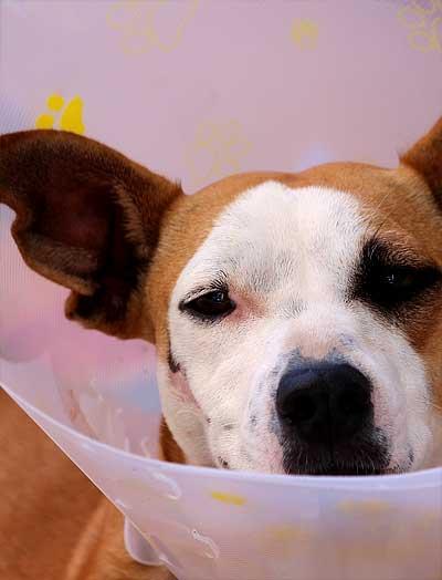 1. Hilfe-Kurse für Hunde
